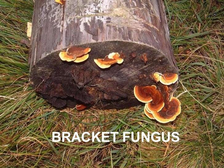 Fungi The Non Green Plants