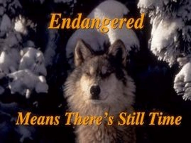 Endangered Means  There's Still Time Endangered     species are like fire  alarms. They tell us about  problems in our ho...
