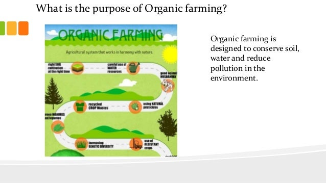 Organic vs. Conventional - what's the difference anyway?