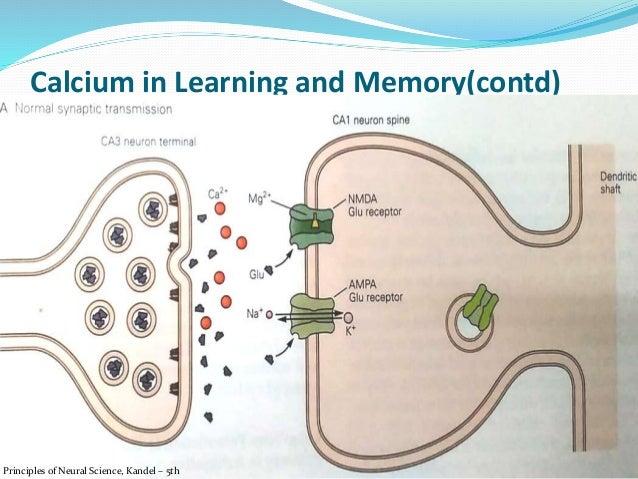 kandel neuroscience 5th edition pdf