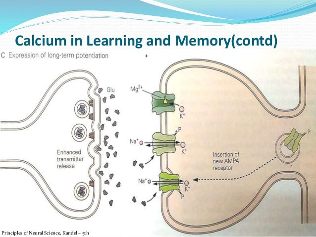Neuroscience purves 5th