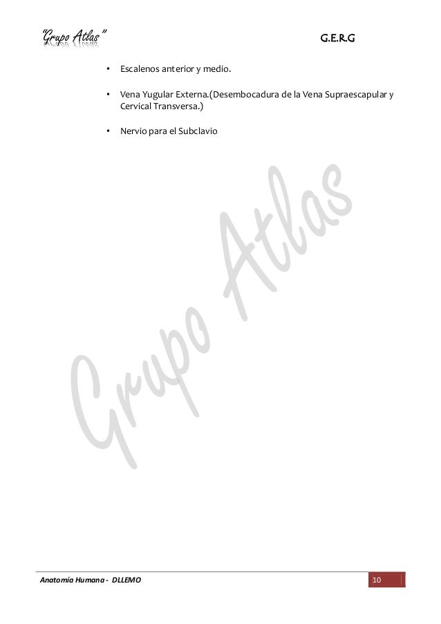 RESUMEN BASICO CUELLO ANATOMÍA DEL GRUPO ATLAS