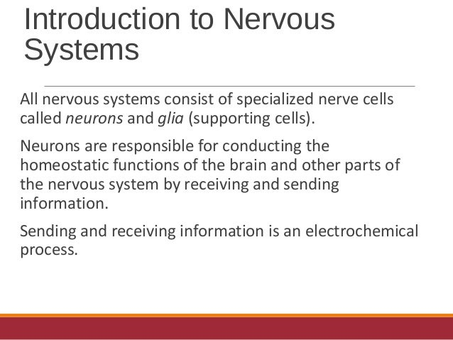 Messages To And From The Central Nervous System Travel Via