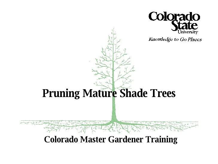 Colorado Master Gardener Training Pruning Mature Shade Trees