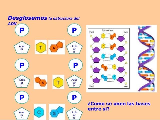 maqueta de la estructura del adn maquetas pinterest pets
