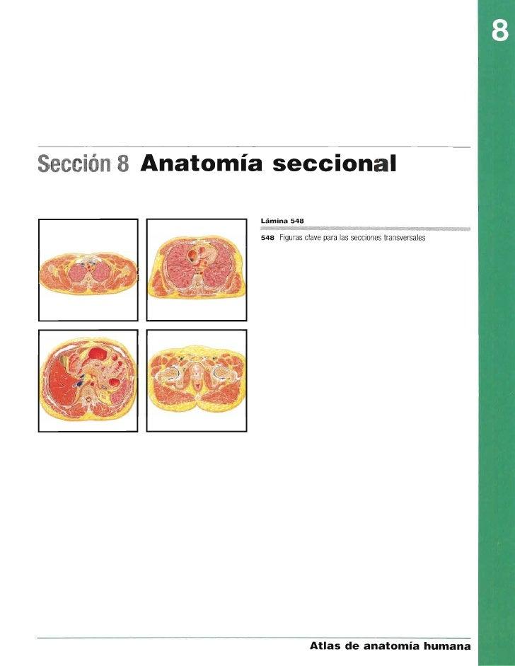 8 anatomia seccional_netter - atlas de anatomía humana, 4ª