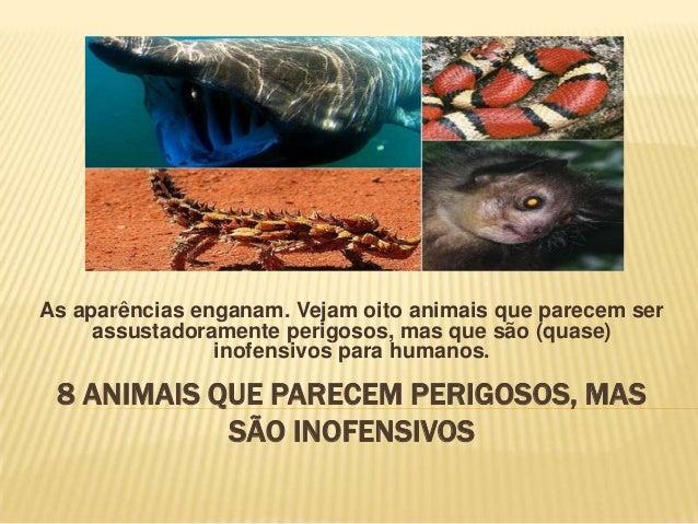 As aparências enganam. Vejam oito animais que parecem ser assustadoramente perigosos, mas que são (quase) inofensivos para...