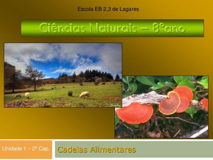 Escola EB 2,3 de Lagares              Ciências Naturais – 8ºanoUnidade 1 – 2º Cap.   Cadeias Alimentares