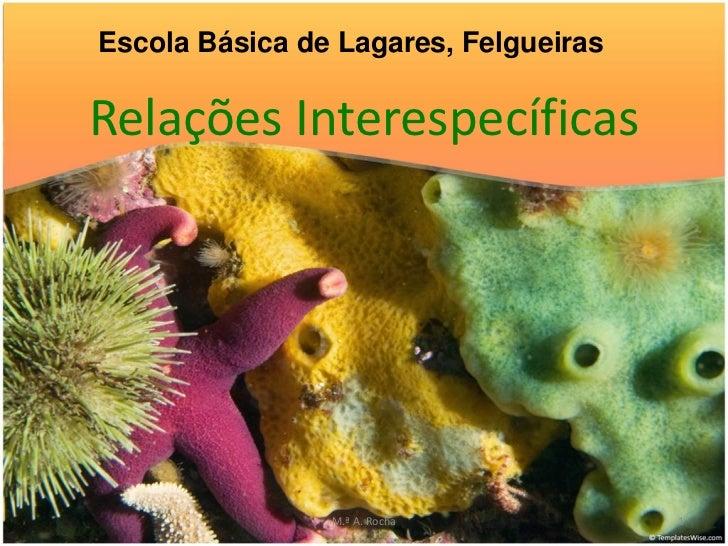 Escola Básica de Lagares, FelgueirasRelações Interespecíficas                M.ª A. Rocha           1