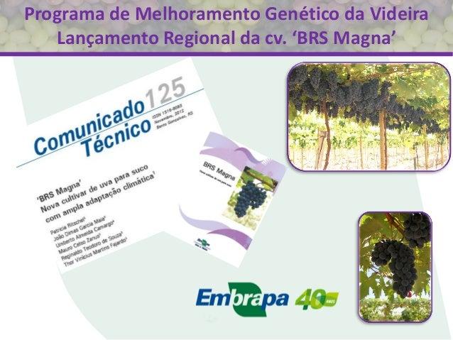 Programa de Melhoramento Genético da Videira Lançamento Regional da cv. 'BRS Magna'