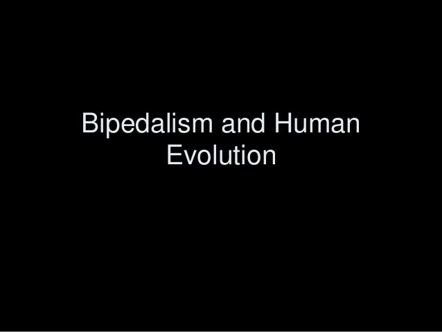 Bipedalism and Human Evolution