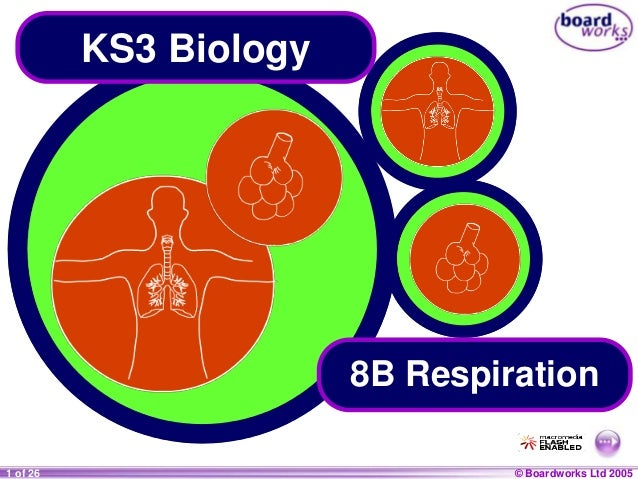 © Boardworks Ltd 20041 of 20 © Boardworks Ltd 20051 of 26 KS3 Biology 8B Respiration