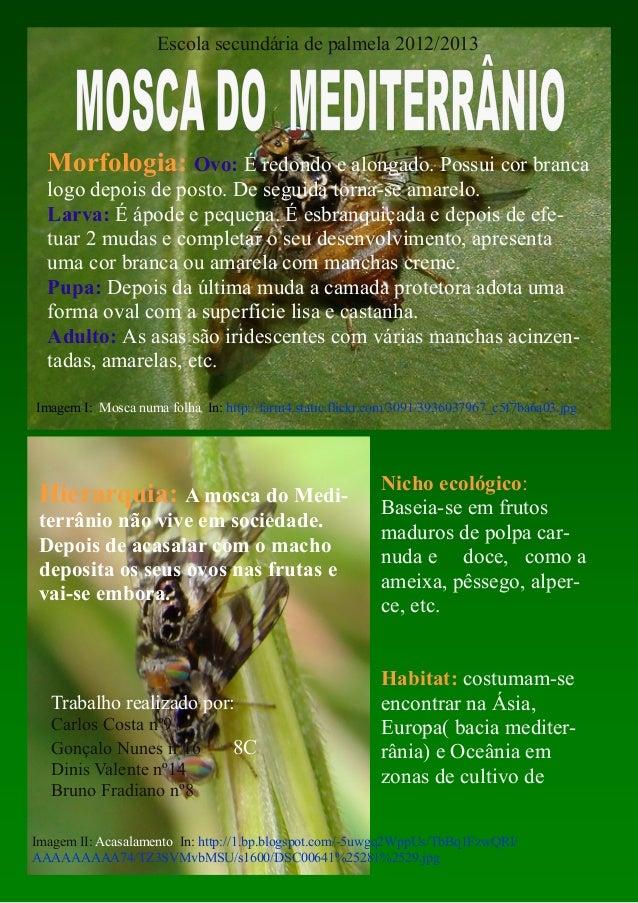 Imagem I: Mosca numa folha In: http://farm4.static.flickr.com/3091/3936037967_c5f7ba6a03.jpgHierarquia: A mosca do Medi-te...