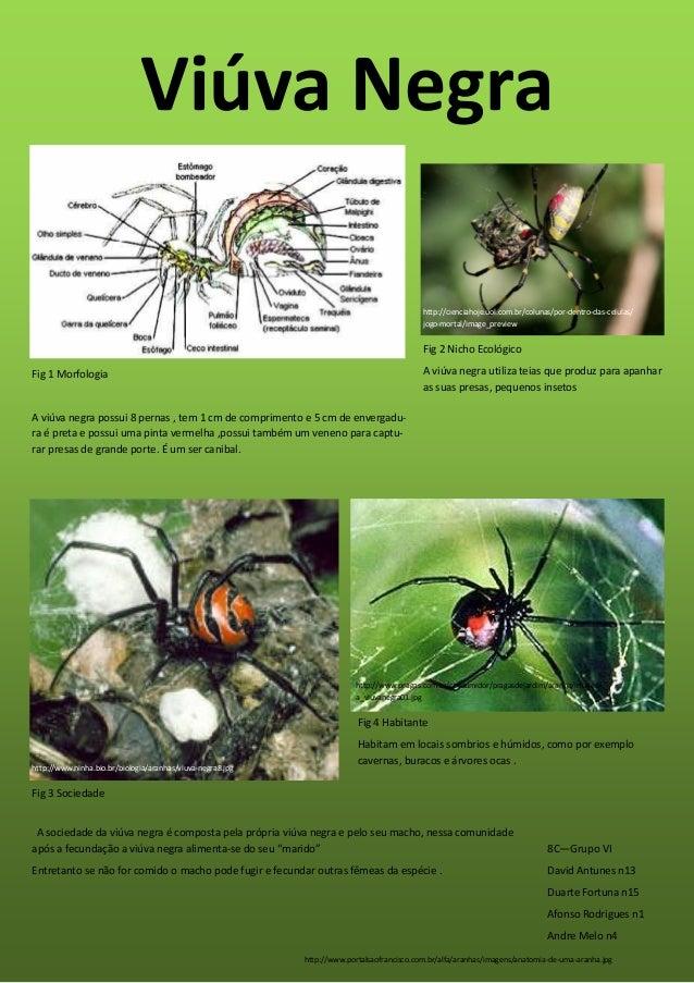 Viúva Negrahttp://www.portalsaofrancisco.com.br/alfa/aranhas/imagens/anatomia-de-uma-aranha.jpghttp://cienciahoje.uol.com....