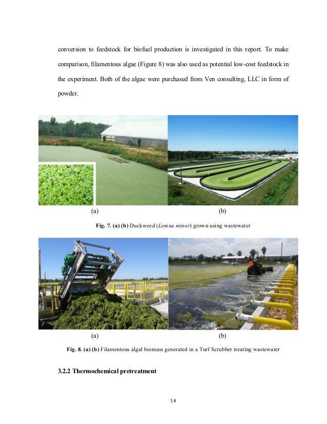 microalgae biodiesel thesis