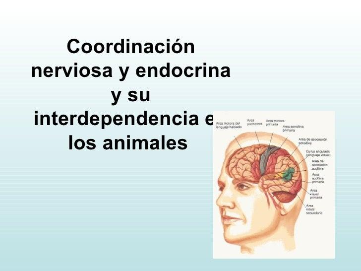 Coordinación nerviosa y endocrina y su interdependencia en los animales