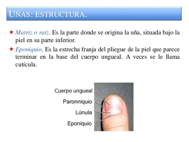 8 cosmética de uñas