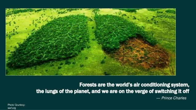 forests are the lungs of the earth Ever hear the old adage that trees are the lungs of the earth it creates an awesome visual and brings a human element to the towering giants that fill our forests.