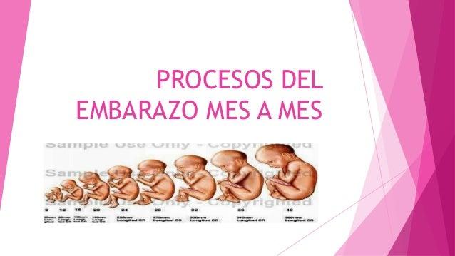 Procesos del embarazo mes a mes - Cuanto debe pesar un bebe de 5 meses ...