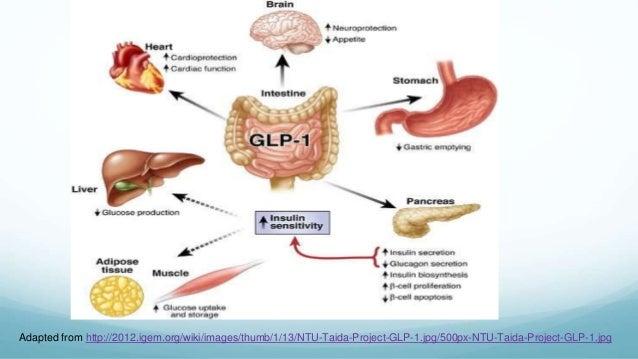 GLP-1 Agonist