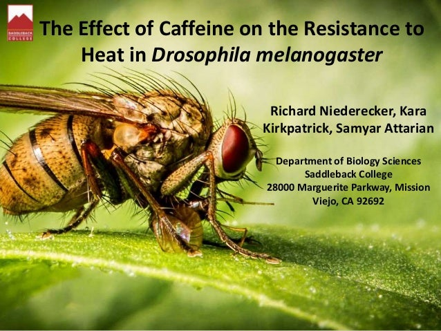 The Effect of Caffeine on the Resistance to Heat in Drosophila melanogaster Richard Niederecker, Kara Kirkpatrick, Samyar ...