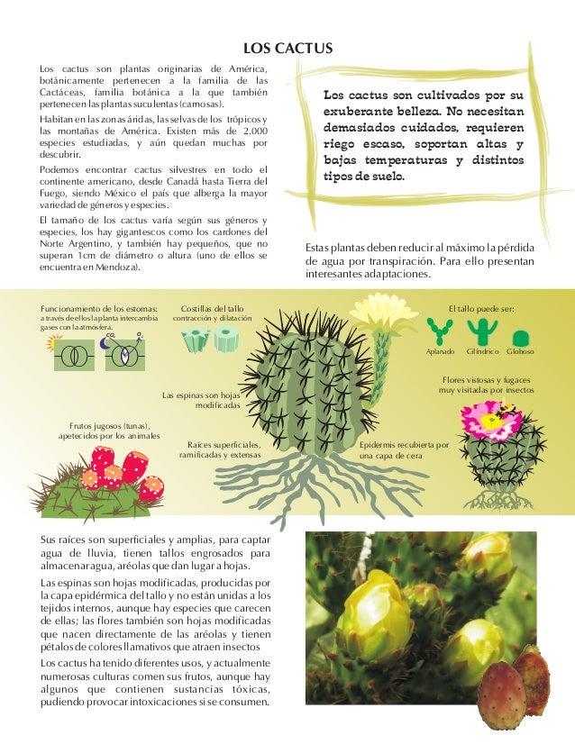 Flora de Mendoza