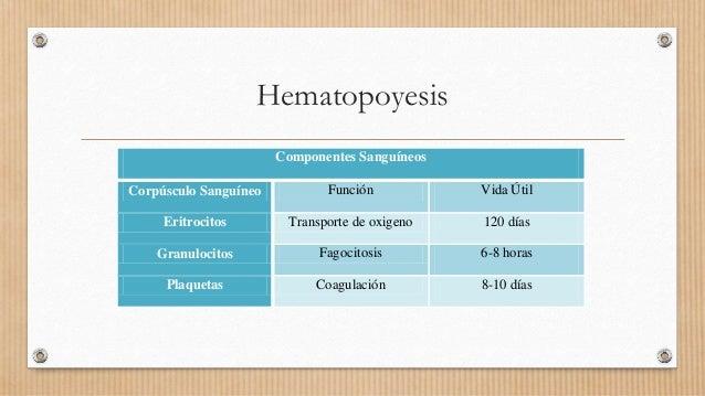 Hematopoyesis Componentes Sanguíneos Corpúsculo Sanguíneo Función Vida Útil Eritrocitos Transporte de oxigeno 120 días Gra...