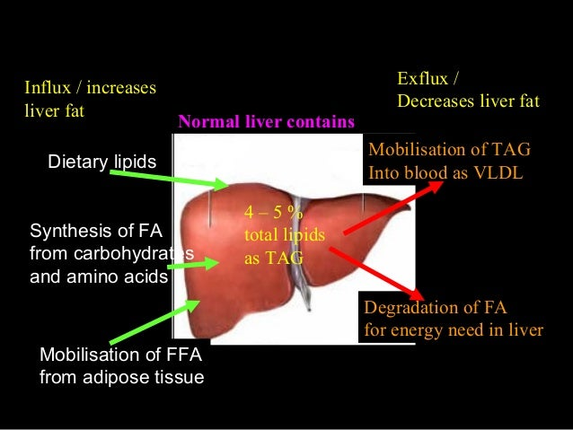 liver synthesises The differences in how the body breaks down and eliminates alcohol may  explain why some are at greater risks of alcoholism, liver damage,.