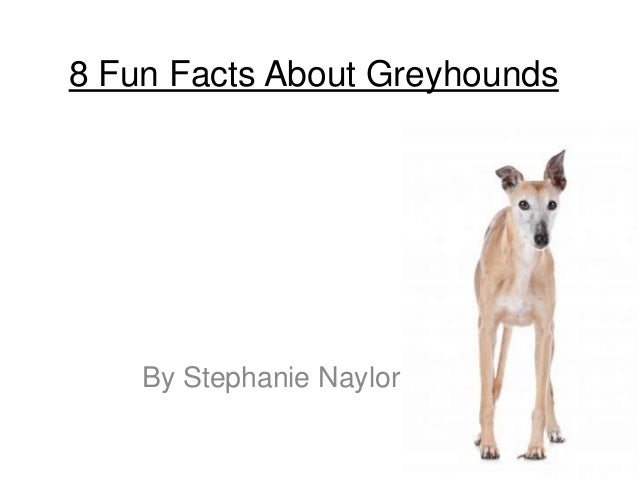 8 Fun Facts About GreyhoundsBy Stephanie Naylor