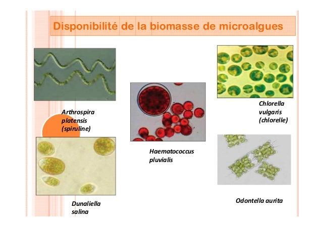 Disponibilité de la biomasse de microalgues Arthrospira platensis (spiruline) Chlorella vulgaris (chlorelle) Dunaliella sa...