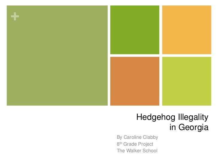Hedgehog Illegalityin Georgia<br />By Caroline Clabby<br />8th Grade Project<br />The Walker School<br />