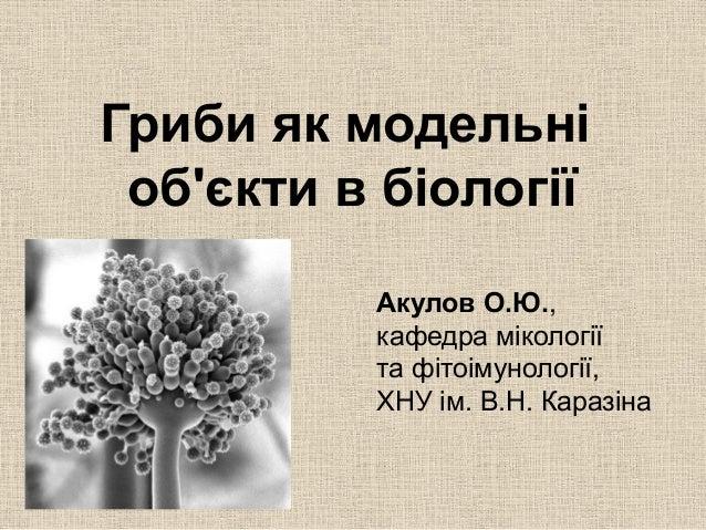Гриби як модельні об'єкти в біології Акулов О.Ю., кафедра мікології та фітоімунології, ХНУ ім. В.Н. Каразіна