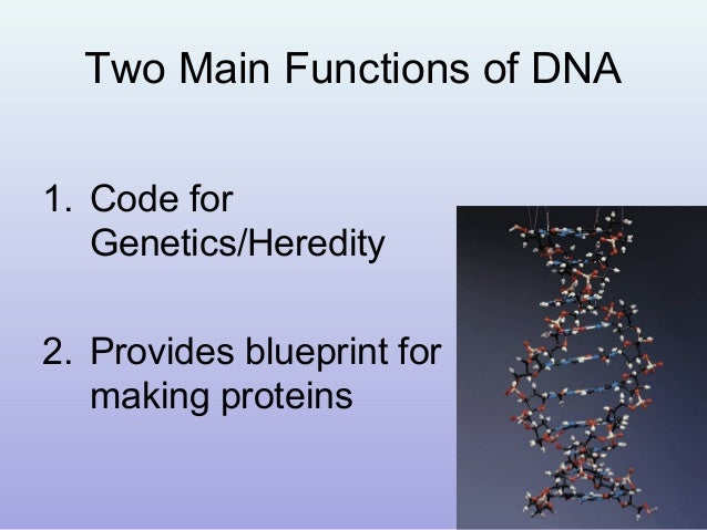 Dna and rna hydrogen bonds the base pairs together 8 malvernweather Choice Image
