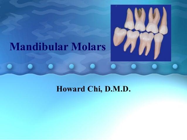 Mandibular Molars Howard Chi, D.M.D.