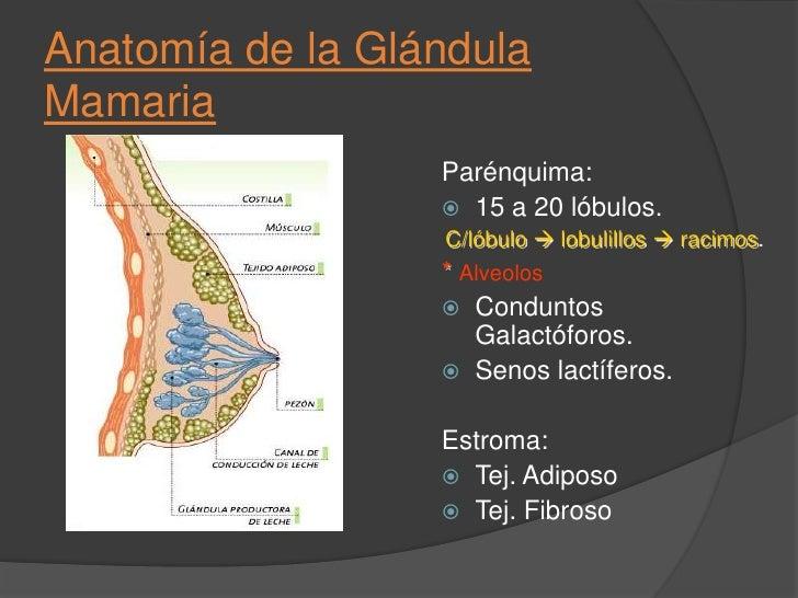 El suero debe ser glucosado sin iones <br />La concentración, la necesaria para mantener unritmo de glucosa intravenosa (i...