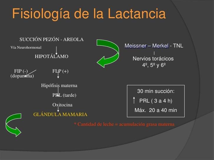 Anatomofisiopatología<br />de la<br />Lactancia Materna<br />