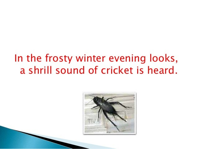 on the grasshopper and cricket Fireflies by owl city lyrics and finally, to your clouded, wounded heart, even a true bell cricket will seem like a grasshopper should that day come.