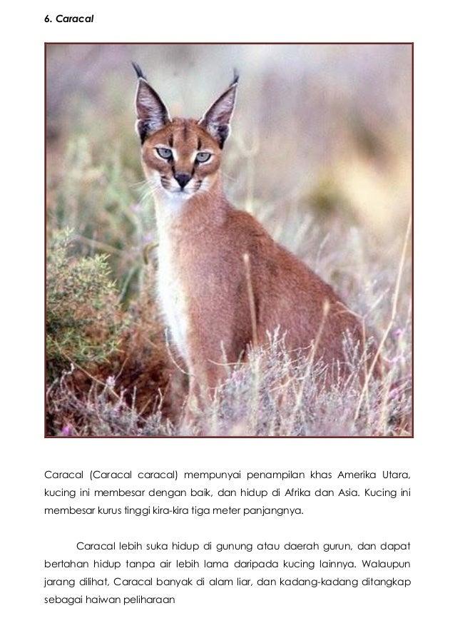 Spesies Kucing Hutan
