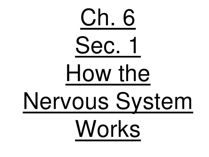 Ch. 6     Sec. 1    How the Nervous System     Works