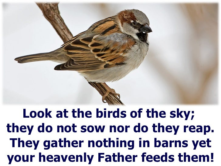Look at the birds of the sky;  they do not sow nor do they reap. They gather nothing in barns yet your heavenly Father fee...