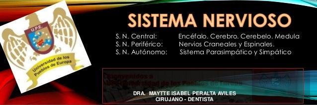 DRA. MAYTTE ISABEL PERALTA AVILES CIRUJANO - DENTISTA S. N. Central: Encéfalo. Cerebro. Cerebelo. Medula S. N. Periférico:...