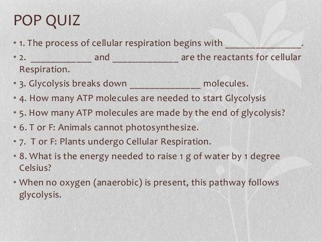 9-1 Cellular Respiration