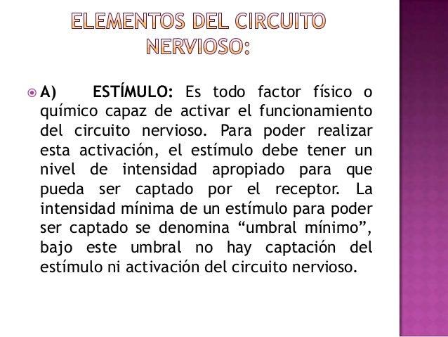 Circuito Nervioso : El circuito nervioso