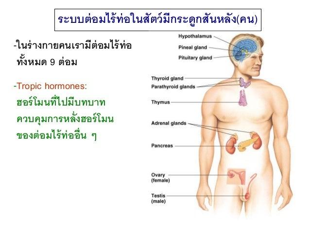 ฮอร์โมนในร่างกาย