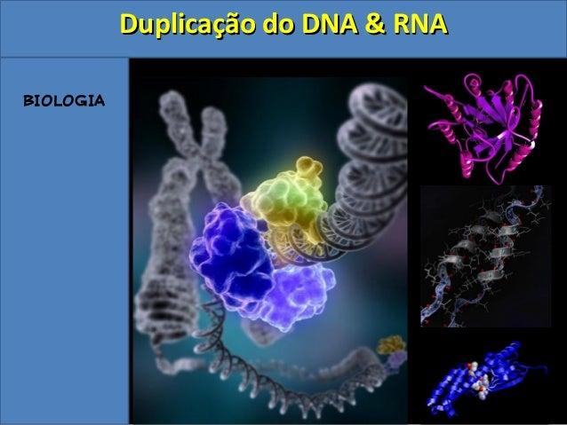 BIOLOGIA Duplicação do DNA & RNADuplicação do DNA & RNA