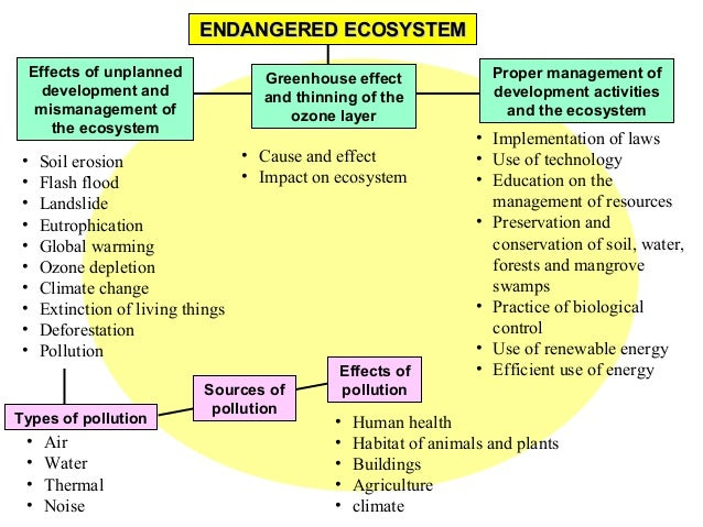 an essay on ecosystem management The importance of ecosystem management and protection heritage value refers to the protection of areas seen as having outstanding universal value from aesthetic and scientific points of view.
