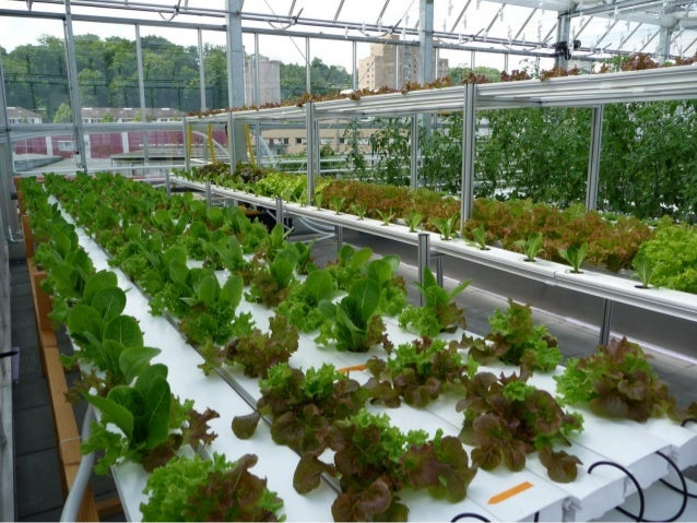 Aquaponics In Classrooms As A Tool To Promote System