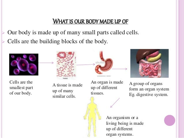what is an organism made up of many cells called