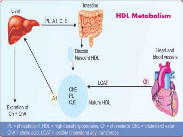 Por qué todo lo que sabes sobre Metabolismo basal es una mentira