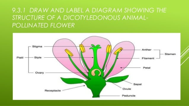 Flowers pollinated animals diagram electrical drawing wiring diagram 9 3 reproduction in angiospermophytes rh slideshare net what animals pollinate animated hummingbird ccuart Gallery